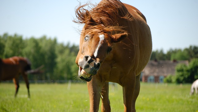 horse weird funny silly